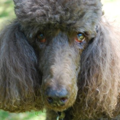 Sheyna (1996-2011), our constant friend and companion.